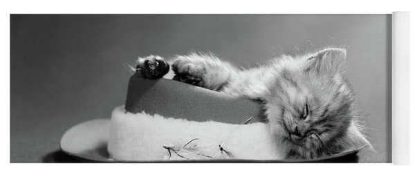 1960s Cat Curled Up And Asleep On An Yoga Mat