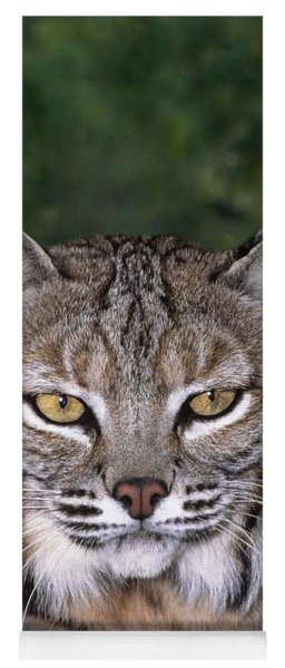 Yoga Mat featuring the photograph Bobcat Portrait Wildlife Rescue by Dave Welling
