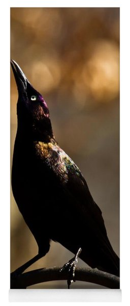 Yoga Mat featuring the photograph Common Grackle by Robert L Jackson
