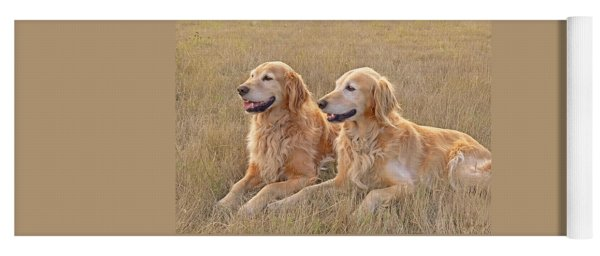 Golden Retrievers In Golden Field Yoga Mat