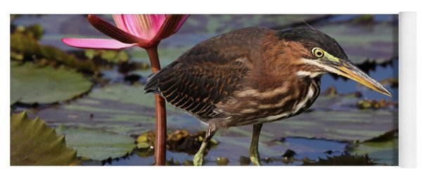 Green Heron Photo Yoga Mat
