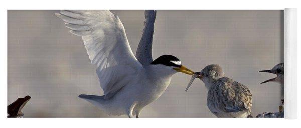 Least Tern Feeding It's Young Yoga Mat