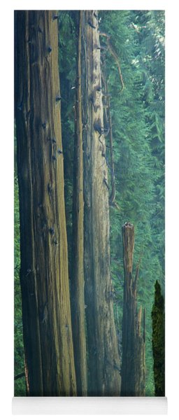 Northwest Forest    Yoga Mat