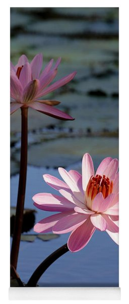 Pink Water Lily In The Spotlight Yoga Mat