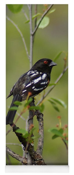 Spotted Towhee Yoga Mat