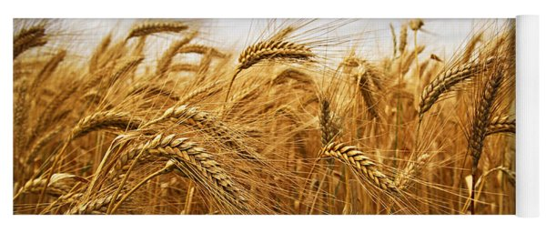 Wheat Yoga Mat