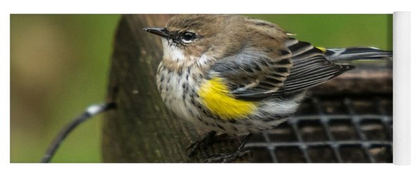 Yoga Mat featuring the photograph Yellow-rumped-warbler by Robert L Jackson