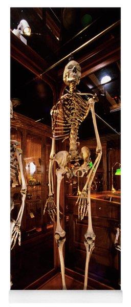 2000s Three Human Skeletons Displayed Yoga Mat