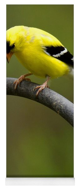 Yoga Mat featuring the photograph American Goldfinch by Robert L Jackson