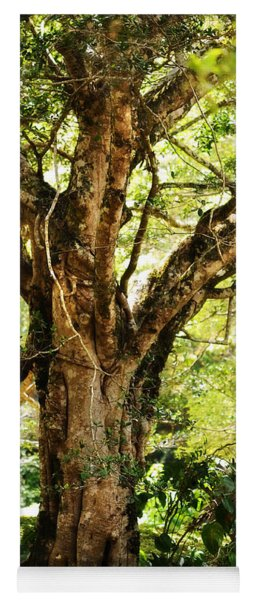 Kingdom Of The Trees. Peradeniya Botanical Garden. Sri Lanka Yoga Mat