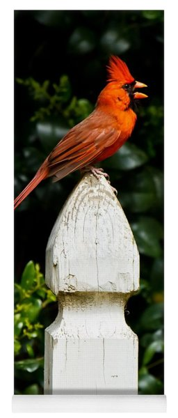 Yoga Mat featuring the photograph Male Cardinal by Robert L Jackson