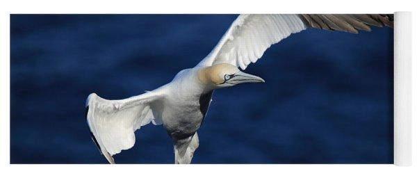 Northern Gannet In Flight Yoga Mat
