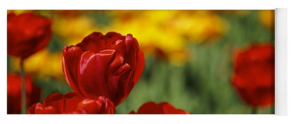 Red And Yellow Tulips Yoga Mat