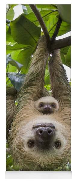 Hoffmanns Two-toed Sloth And Old Baby Yoga Mat