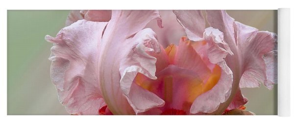 Yoga Mat featuring the photograph Pink Electrabrite Bearded Iris by Patti Deters