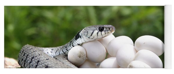 Grass Snake With Eggs Yoga Mat