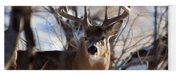 A Buck In The Bush Yoga Mat