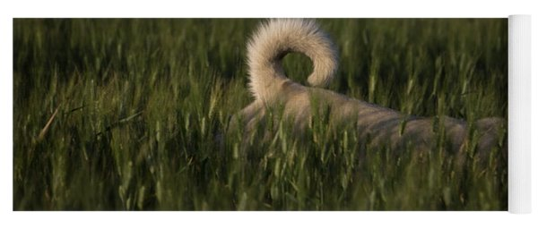 A Dog Walks Through A Wheat Field Yoga Mat
