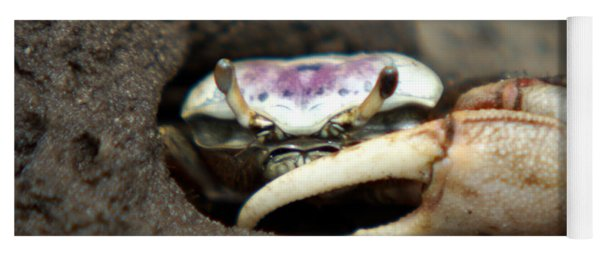 A Fiddler Crab Around Hilton Head Island Yoga Mat