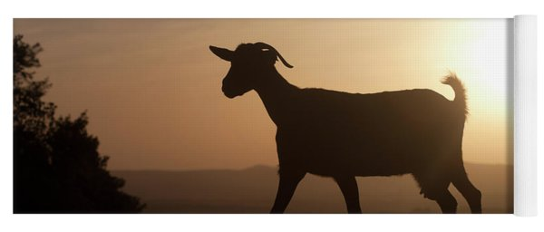 A Goat Walks At Sunset In Prado Del Yoga Mat