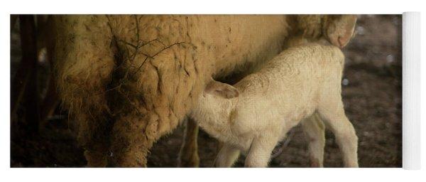 A Lamb Sucks Milk From His Mother Yoga Mat