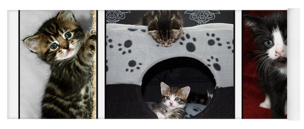 A Montage Of Kittens Yoga Mat