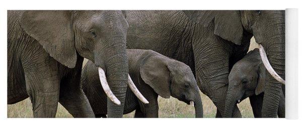 African Elephant Females And Calves Yoga Mat