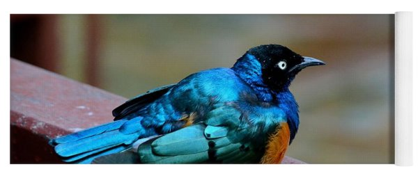 African Superb Starling Bird Rests On Wooden Beam Yoga Mat