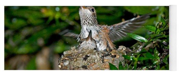 Allens Hummingbird Chicks Yoga Mat