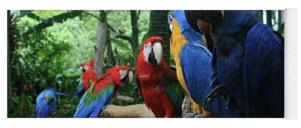 Aloha Kaua Aloha Mai No Aloha Aku Beautiful Macaw Yoga Mat