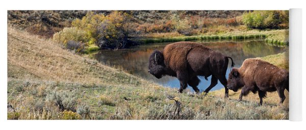 American Bison Couple At Home On The Range Yoga Mat