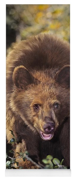 Yoga Mat featuring the photograph American Black Bear In Tree Wildlife Rescue by Dave Welling