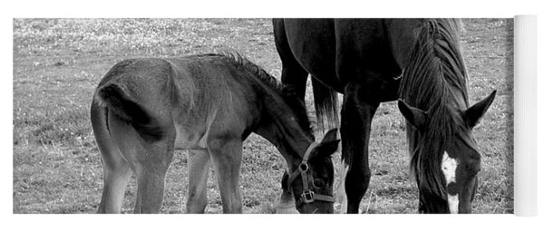 Lunch - Mare And Foal B/w Yoga Mat
