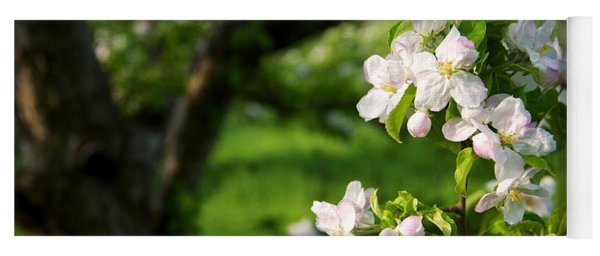 Apple Blossoms In The Orchard Yoga Mat