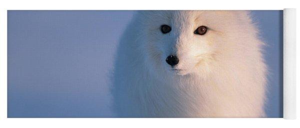 Arctic Fox North Slope Alaska Yoga Mat