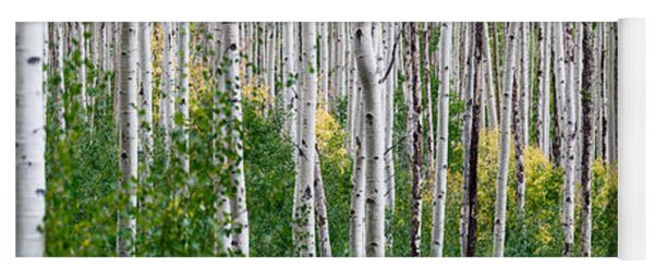 Aspen Trees Yoga Mat