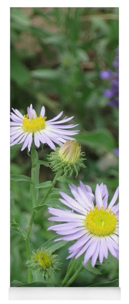 Asters In Close-up Yoga Mat