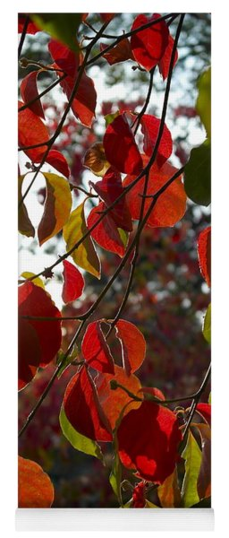 Autumn Dogwood In Evening Light Yoga Mat