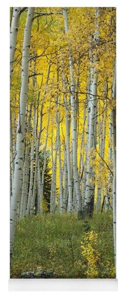 Autumn In The Aspen Grove Yoga Mat