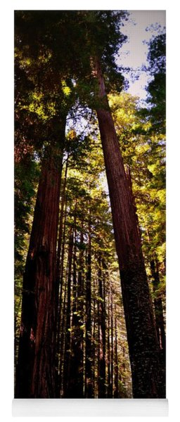 Avenue Of The Giants Yoga Mat