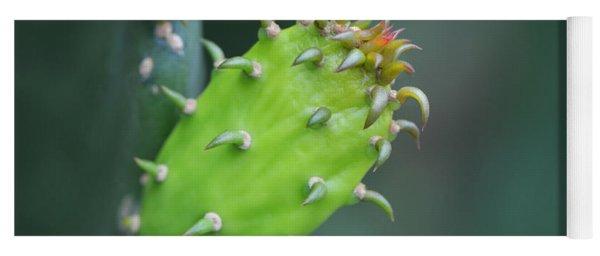 Baby Cactus - Macro Photography By Sharon Cummings Yoga Mat