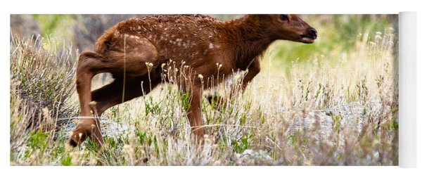 Yoga Mat featuring the photograph Baby Elk by Shane Bechler