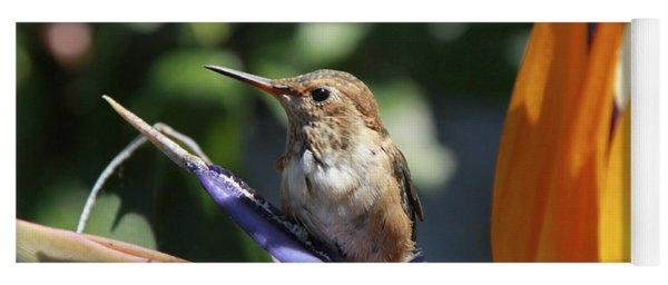 Baby Hummingbird On Flower Yoga Mat