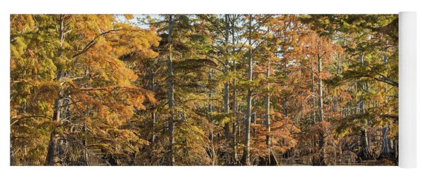 Bald Cypress Trees In Swamp, Horseshoe Yoga Mat
