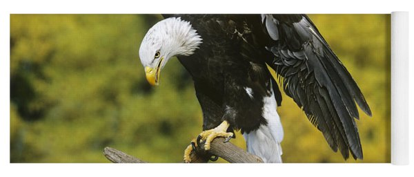 Yoga Mat featuring the photograph Bald Eagle In Perch Wildlife Rescue by Dave Welling
