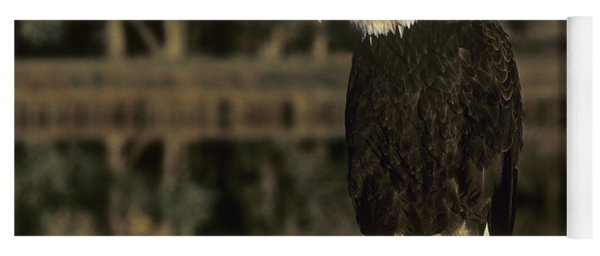 Bald Eagle On Dead Snag Wildlife Rescue Yoga Mat
