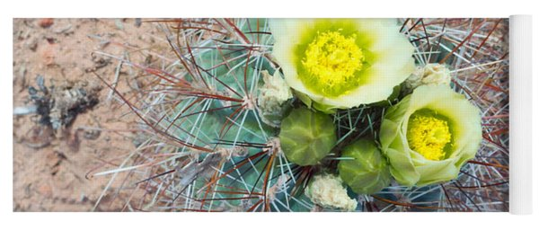 Barrel Cactus Blossoms Yoga Mat