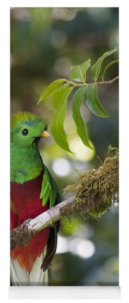 Beautiful Quetzal 1 Yoga Mat