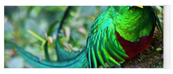 Beautiful Quetzal 4 Yoga Mat