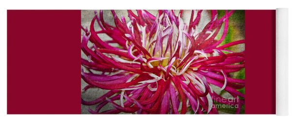 Beautiful Texturized Red Spider Dahlia Flower Macro Yoga Mat